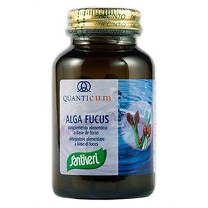 Alga Fucus Santiver