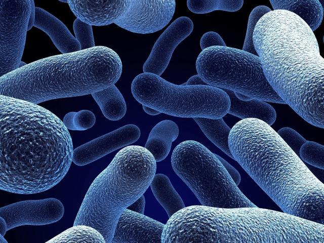 Propolis anti bacterias