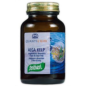 Alga Kelp de Quanticum