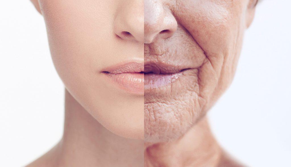 Cardo Mariano Anti Envejecimiento